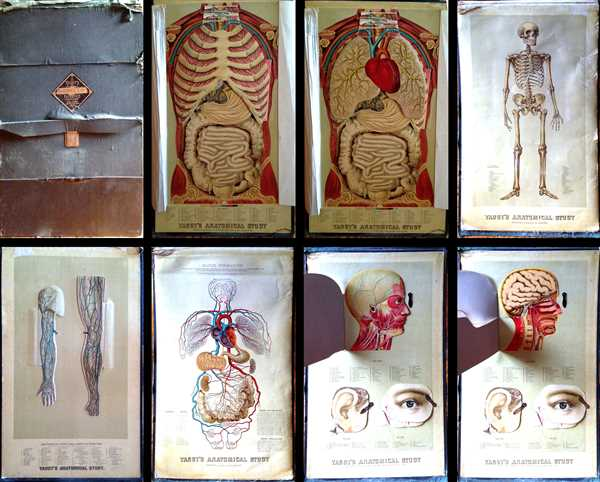 Yaggy's Anatomical Study Presenting the Skeleton, Muscles, Arteries, Veins and Nerves also Four Life-Size Manikins of The Body, The Head, The Eye and Ear with Additional Manikins of Arm and Leg.