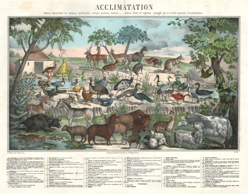 Acclimatation Tableau représentant les Animaux, quadrupèdes, oiseaux, poissons, insectes, - Arbres, fruits et végétaux, propagés par la Société impériale d'Acclimatation. - Main View