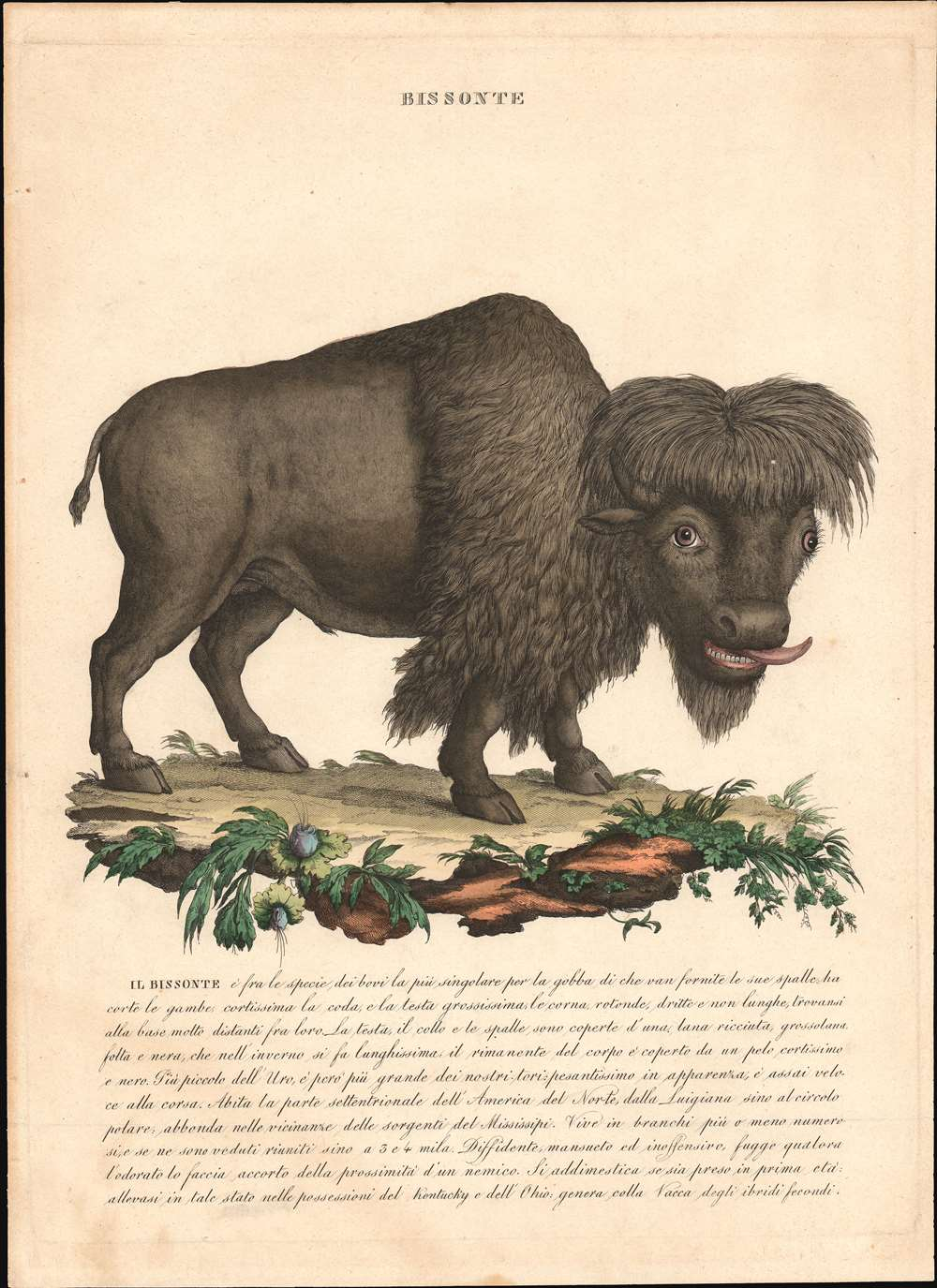1750 Italian Zoological Print of an American Bison