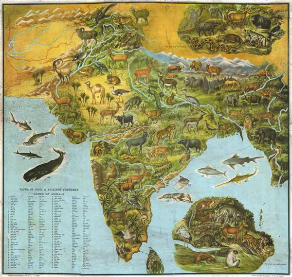 Fauna of India and Adjacent Countires.: Geographicus Rare ... on map of india islands, map of india china, map of india maps, map of india tigers, map of india architecture, map of india politics, map of india cattle, map of india rivers, map of india independence, map of india parks, map of india jungles, map of india range, map of india history, map of india africa, map of india natural resources, map of india landscape, map of india food, map of india waterways, map of india states, map of india sea,