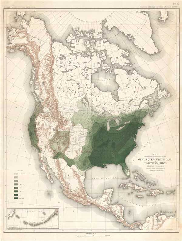 Map Showing the Distribution of the Genus Quercus (the Oaks) in North America Exclusive of Mexico.